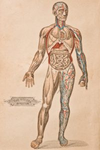 drawing of the human body